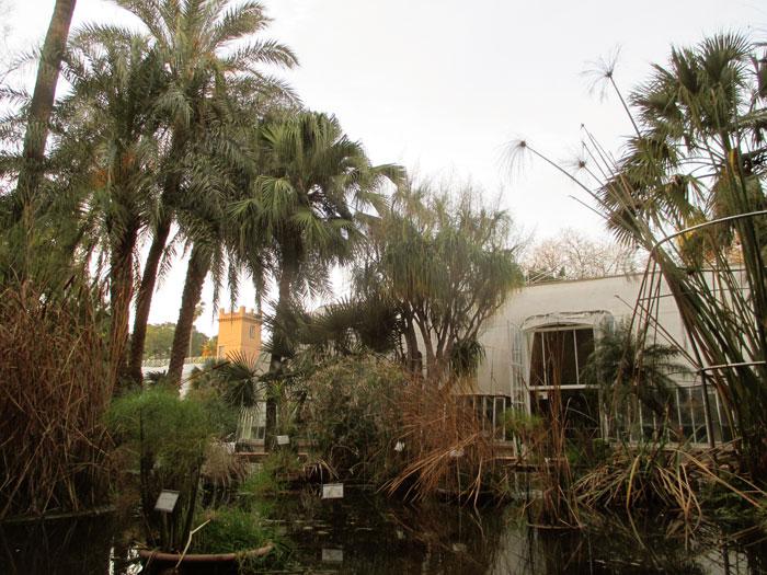 jardin botanico valencia visitar