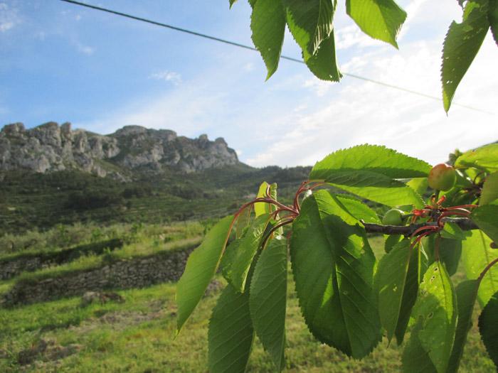 vall-gallinera-ruta-cereza-2017 adzucats excursiones en grupo